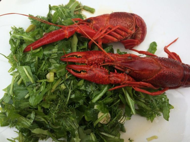 Flusskrebse mit Salat